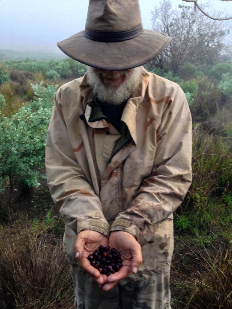 "Mark Hanson, a.k.a. ""Sandalwood Man,"" collects native Hawaiian sandalwood seeds"
