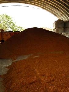 Heaps of sandalwood sawdust await shipment at Haloa 'Aina