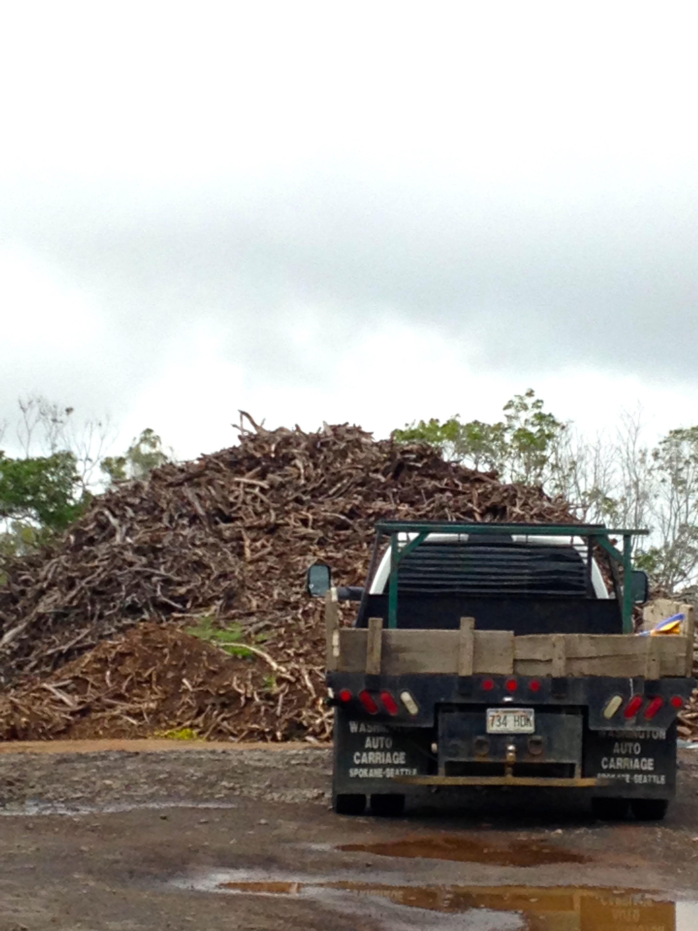 Tree of Heaven - Hawaiian Sandalwood | SHANNON WIANECKI